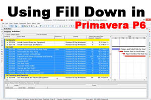 Using Fill Down in Primavera P6 – video